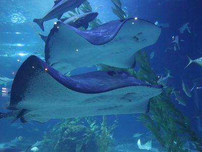 해저 가오리 수족관 아쿠아리움 바다