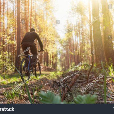 숲 자연 자전거 나무 풀 라이딩