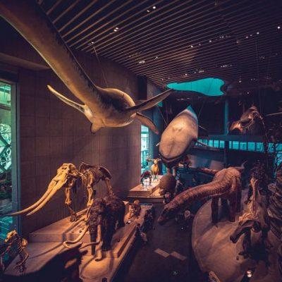 자연 박물관 모형 전시품