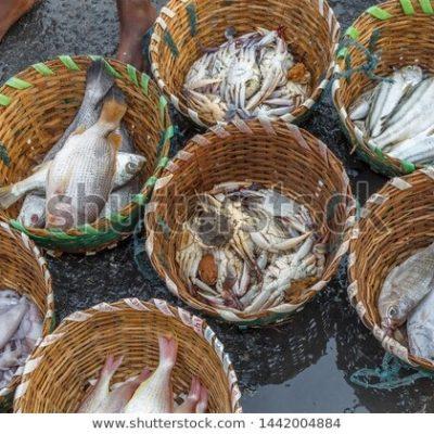 생선 어류 수산시장 생선잡이 어구