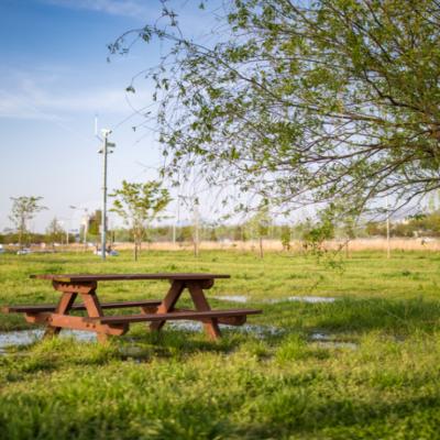 공원 테이블 자연 나무 풀 식물 야외