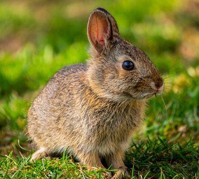 bunny 토끼 rabbit 동물