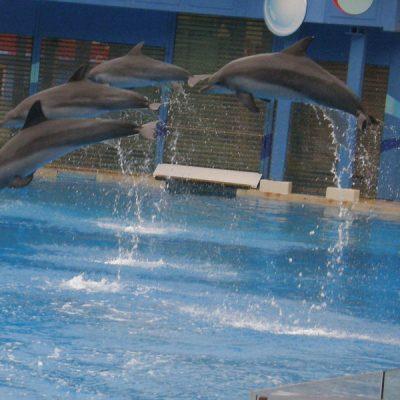 돌고래, 바다, 수족관