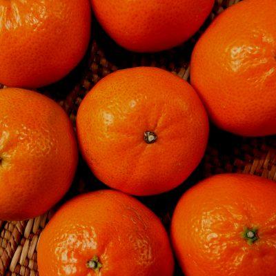 오렌지 과일 감귤 귤
