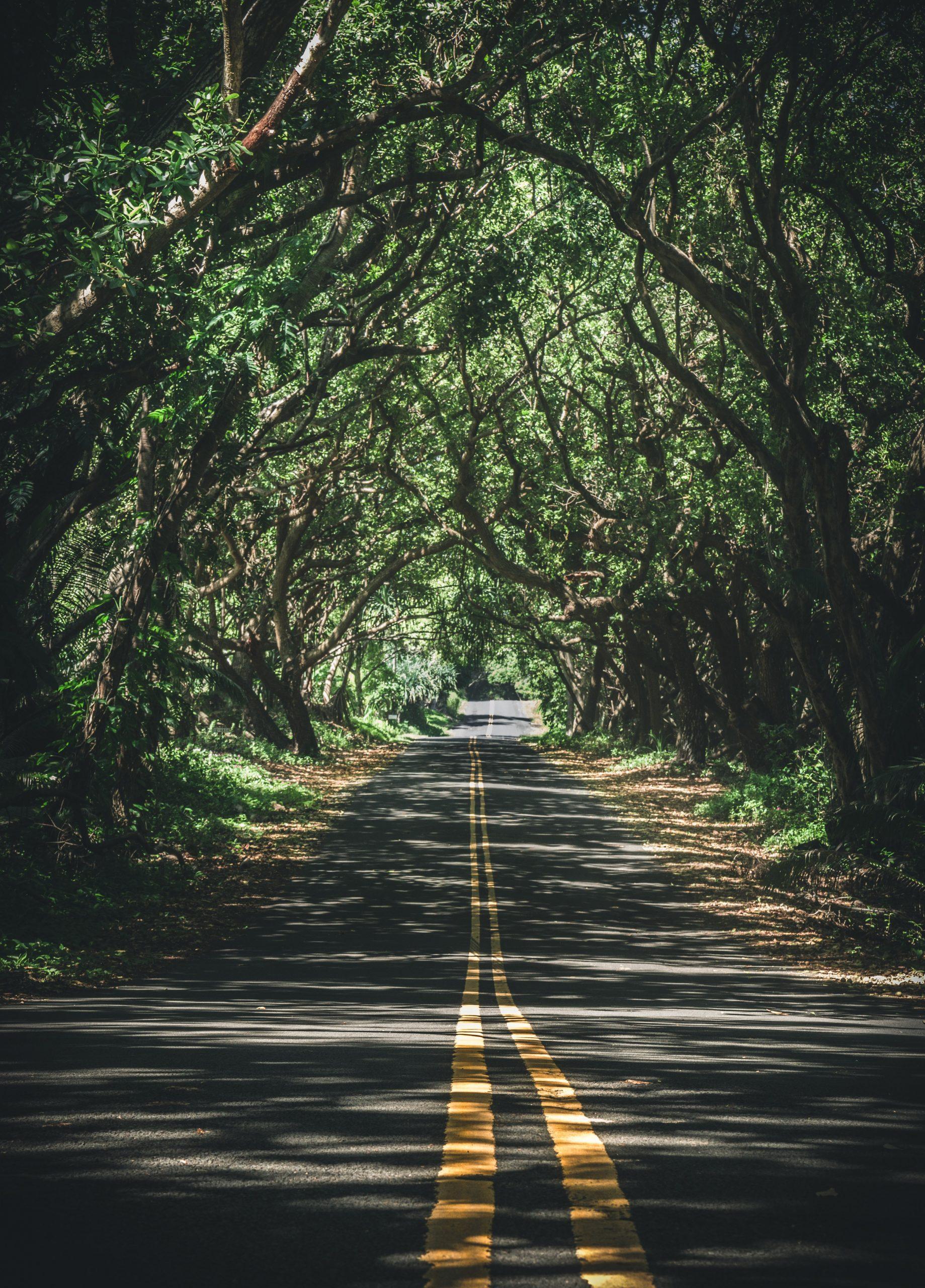 가로수길 도로 나무 터널