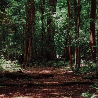 나무 숲 풀숲