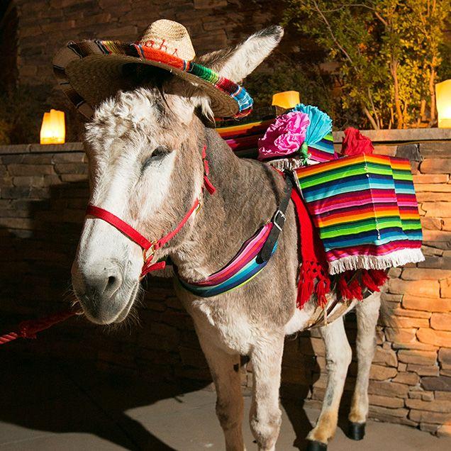 당나귀, 멕시코, 축제