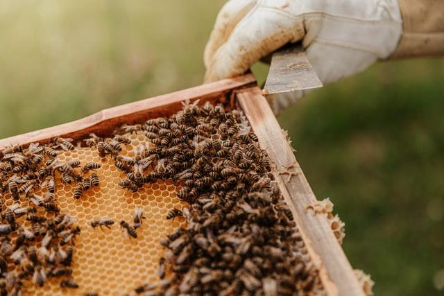 벌 꿀벌 양봉업