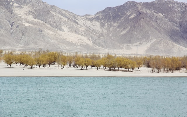 산 호수 강 물 나무 사막