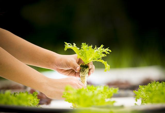 온실 재배, 수경 재배, 유기농, 이산화탄소 배출량 감소