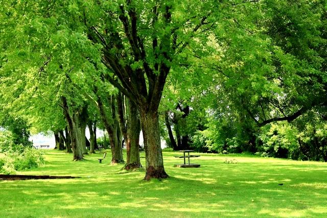 공원,풍경,나무,산책