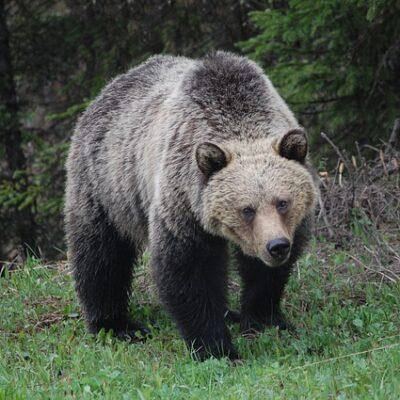 일본, 곰, 도심 출몰, 곰조심