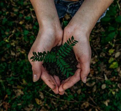 나무, 흙, 숲, 자연