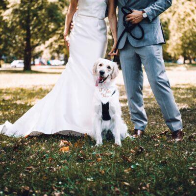반려동물 강아지 결혼식 개