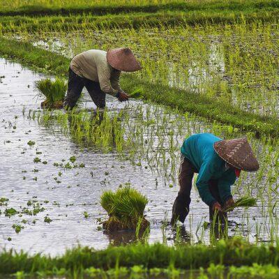 농촌, 농부, 노동자