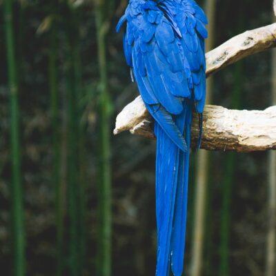 앵무새 새 조류